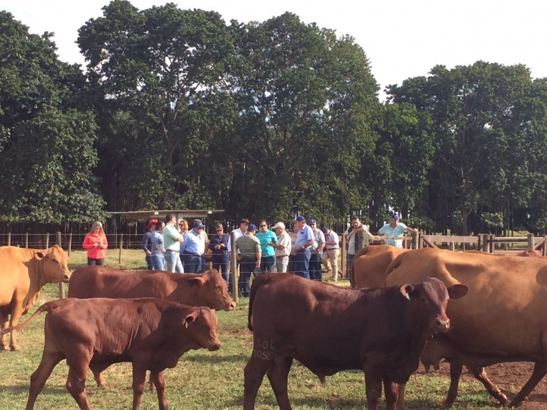 Raça Senepol atrai pecuaristas e agricultores de Costa Rica para Uberlândia
